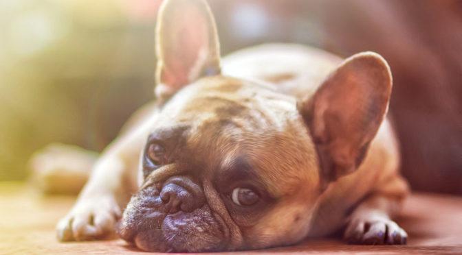 Gdzie ułożyć legowisko dla psa?