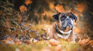 Czy warto wziąć psa ze schroniska?