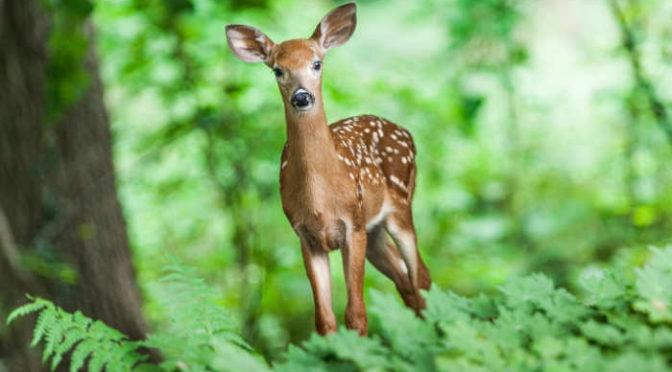 Jak zachowywać się w lesie podczas upałów?